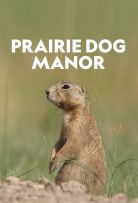 Watch Movie Prairie Dog Manor - Season 1
