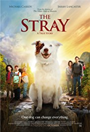 Watch Movie The Stray